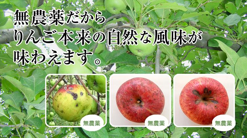 サンふじの無農薬栽培image