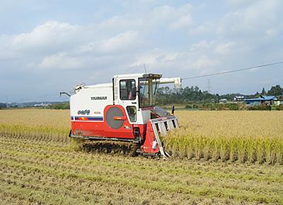 稲刈りphoto